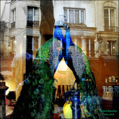 The Kiss (reworked version) (Pifou 2010) Tags: street city light paris france reflection building art me colors birds animals town magasin streetlamps couleurs peacock moi lumiere boutique storewindow stores rues reflets leshalles ville immeuble lampadaire oiseaux vitrine saintvalentin paon animeaux 2013 gerardbeaulieu pifou2010 storesdisplays thekissreworkedversion