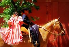 Desvelo (Eduardo Amorim) Tags: horses horse southamerica argentina criollo caballo cheval caballos cavalos pferde cavalli cavallo cavalo gauchos pferd soe pampa hest hevonen chevaux gaucho  amricadosul hst gacho  campero amriquedusud provinciadebuenosaires  gachos  sudamrica sanantoniodeareco suramrica amricadelsur  areco sdamerika crioulo caballoscriollos criollos   pampaargentina camperos americadelsud mywinners abigfave anawesomeshot  crioulos cavalocrioulo americameridionale caballocriollo 200750plusfaves campeiros campeiro eduardoamorim cavaloscrioulos pampaargentino