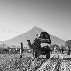 Pushkar 2012 (Parveen Singh) Tags: morning friends sky people music sun india white black balloons dessert fun temple happy grey tents wire locals village place bright indian hill crowd trains tourist poles 1855mm foreign pushkar rajasthan villagers revisited camelfair canon550d