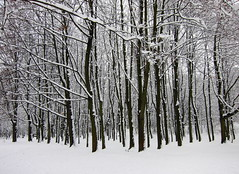 (ela_s) Tags: park winter zima drzewa canons90