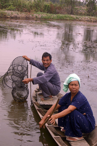 Catching shrimp in a rice-shrimp field in Bac Lieu province, Vietnam. Photo by Kam Suan Pheng, 2011.