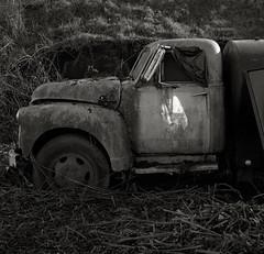 Truck, Astoria (austin granger) Tags: old sunlight reflection abandoned film oregon truck square mirror rust time decay astoria blackberries transience gf670 austingranger