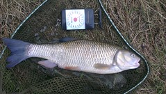 February 2013:  New PB chub 6lb-9. (CraftmaticAdjustableBed) Tags: bread chub huge cherwell 6lb