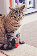 almost friends (Elisa Severi) Tags: pet animal cat friend kitten friendship kitty gatto domestico compagnia animale micio micia gatta ciuffa elisaseveri