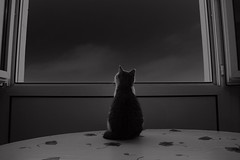 Cat pensive (MoJiTo-Choubi) Tags: white black cat blackwhite chat raw noiretblanc mojito pensive lightroom blackwhitephotos lightroom4