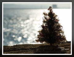 Merry Christmas (Ache_Hsieh) Tags: christmas blue sky macro digital olympus merry e500 zd 50mm20