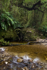 Fenian Creek - Oparara Valley (Pete Prue) Tags: newzealand creek forest bush stream track native walk valley nz tropical lush ferns doc westcoast tramp fenian oparara peteprue feniancreek