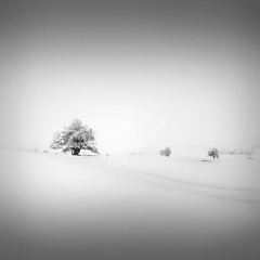 | Catharsis II  forgotten dreams (Julia-Anna Gospodarou) Tags: trees winter blackandwhite bw white mountain snow nature monochrome square landscape highlights minimal greece negativespace zen dreamy serene highkey 2012 snowscape winterscape catharsis metsovo blackandwhitefineart nikond7000 juliaannagospodarou tamron18270pzd