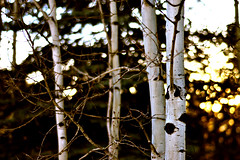 Aspen Trees at Dusk (Colin P Murphy) Tags: trees way stars 50mm star interesting nikon colorado trails vail co f18 aspen milky d3100