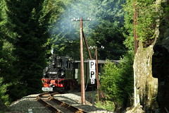 Through the forests (DoctorMP) Tags: las summer trains steam sachsen forests locomotives narrowgauge dampflok steinbach kolej lato wask kolejka waskotorowka schmalspurbahnen parowóz schmalspurbahn ivk wąskotorówka pressnitztalbahn parowozy dampfloks wąsk joehstadt stolln schloessel