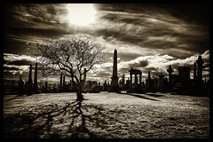 The City of The Dead (Feldore) Tags: city tree cemetery graveyard dead scotland glasgow sony hell hellish spooky single solitary mchugh necropolis rx100 feldore