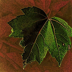 Green Leaf (hollykl) Tags: green photomanipulation square leaf digitalart vividimagination wardpark arteffects somethinggreen sharingart awardtree