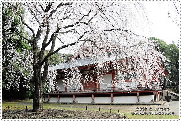 醍醐寺 (6).jpg