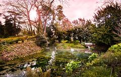 Disparo: 1938 (Arantzazu Alvarez) Tags: flores verde sol puente arbol lago atardecer flora agua nikon jardin rosa asturias paisaje botanico fotografia f8 11mm gijon alvarez arantzazu nikond90 pikafreakz