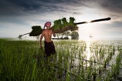 Planting Rice (wu di 3) Tags: water sunrise thailand southeastasia rice labour farmer hardwork planting phatthalung staplefood