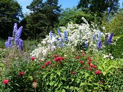 P1110075 (jrcollman) Tags: philadelphus harlowcarrgarden plants aplant pplant allium delphinium monarda mplant