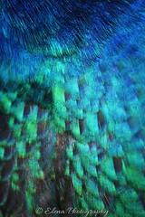 Korkeasaari - Paon 1 (Elena Delahaye) Tags: finland nature helsinki island sea north scandinavia suomi