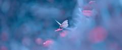 Dreams of a rhyme/ ... ( / Karthikz) Tags: d800 kerala cwc chennaiweekendclickers 135f2 dreams fineart depiction zen zenologue