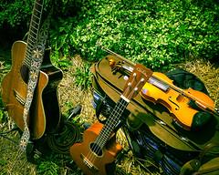 Tools of the Trade (L. M. Bernhardt) Tags: instrument violin ukulele acousticguitar musicalinstrument plants outdoor color boyerrivergardensandgifts tomatotasting