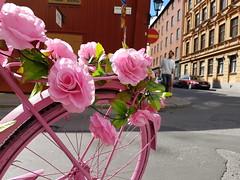 The Pink Bike (Kenny_lex) Tags: pink bike sweden stockholm street flowers color