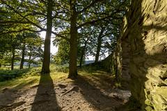 Old John Wood at Bradgate Park (John__Hull) Tags: bradgate park old john wood newtown linford trees stone wall shadow light nature england countryside nikon d3200 sigma 1020mm