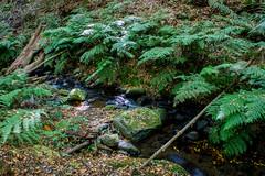 LaGomera2016 (yeray.ventura) Tags: verde bosque cedro paisaje naturaleza agua rio riachuelo corriente hdr