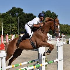DSC_1227 (2) (ploufjf_64) Tags: paus show jumping chevaux pau 2016