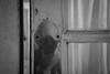 autoritratto alieno (pino piedimonte) Tags: pinopiedimonte alienazione alieni alieno alone biancoenero bw blackwhite head italia italy incomunicabilità licwip milano monocrome monocromo neroametà nikond3300 omaggio portrait autoritratto ritratto uomo fondazioneprada