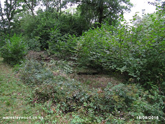 After Box Junction coppice 18/09/2016 (the_greenman) Tags: waresleywood gransdenwood wildlifetrust ancientwoodland hazel bluebells oxlips coppicemanagement thegreenman wwwwaresleywoodcouk conservation