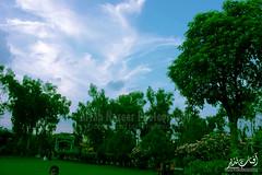 IMG_7312 (Aftab Nazeer) Tags: beta la paloma 2016 agosto en madrid fiestas de chotis zarzuela calle calatrava chulapos corazn madrileos chulapas agrupaciones pasodobles bailes bailando el mantn manila plant tree outdoor garden