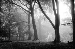 Woodland mist in black and white (SimonLea2012) Tags: silhouettes trees forest warleywoods westmidlands nature nocolour light atmosphere landscape mono blackandwhite mist woodland