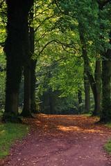 Heading into Autumn (Sundornvic) Tags: woods trees autumn light shadows green paths ways park