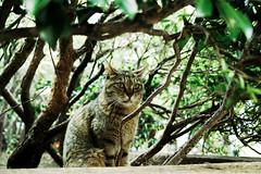neko-neko1522 (kuro-gin) Tags: cat cats animal japan snap street straycat  sigma dp2