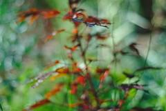 DSC_0031 (criscrot) Tags: parcsaintemarie nancy lorraine bokeh colors d200 50mm18 automne autumn couleurs