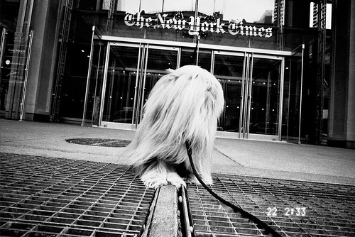 Thumbnail from The New York Times Building