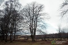 Scottish Countryside at Clava Cairns (uncorneredmarket) Tags: landscape scotland highlands rocks edinburgh unitedkingdom stones fields cairns culloden scottishhighlands clavacairns