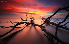 Everything's Dead (Explored) (Fakrul J) Tags: ocean life longexposure trees sunset sky cloud seascape beach nature clouds canon landscape dead photography landscapes amazing flickr raw skies silent seascapes view dusk no shoreline scenic surreal nobody mangrove shore fallen malaysia stick dreamy ghostly guardian fallentree selangor guardians deadtrees beautifulsunset banting morib singleshot explored nohuman kelanang eos500d pantaikelanang singhrayfilter leefitlers darylbensonreversegrad fakruljamil wwwfakruljamilcom imagewithcolors leeproglass3stop