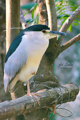 I thought it is one legged, but not.. (361 Studio) Tags: nature animals forest outdoor bangalore bannerghatta creatures