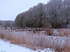 Frosted trees_00505-imp (John van Rhijn) Tags: bridge winter snow hoarfrost sneeuw ijs bruggetje zuidholland rijm rijp zuidbeijerland hoekschewaard korendijk sonydschx200v borrekeen zuidbeijerlandsebos johnvanrhijn