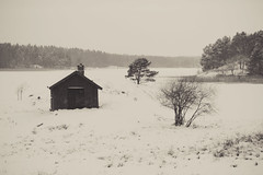 The cabin (DavidAndersson) Tags: trees winter snow cold cabin sweden lonely deserted vnersborg tamron18200f3563 vassbotten vassnda