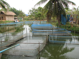 Aquaculture in Cambodia. Photo by Chea Seila, 2011.