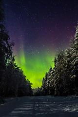 Road to greener pastures? (Karppikala) Tags: sky snow green night forest finland stars lights aurora northern