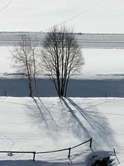 Schattenspiel (mikiitaly) Tags: schnee winter italy bume sdtirol altoadige pfitschtal pfitsch sailsevenseas photographyforrecreation elementsorganizer11 besteverdigitalphotography
