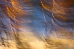 Journey to the Underverse (a galaxy far, far away...) Tags: sunset abstract motion tree nature alberi flora tramonto mood branch dof outdoor branches curves tr dream atmosphere boom vision rbol dreamy birch intimate panning albero magical puu arbre ocaso baum atmospheric rami coucherdesoleil otherworldly bole  onirico oneiric ramification abigfave artisticblur sapei 70300canon ramify flickrdiamond mossoartistico astrattonaturale canon5dmarkii robertobertero intimatevision