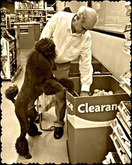 Searching for Buried Treasure.........Explore (Midnight and me) Tags: sepia toys explore standardpoodle judygarland somewhereovertherainbow toyshopping aguyandhisdog blackstandardpoodle searchingforburiedtreasure clearanceshopping shoppingdog midnightandme