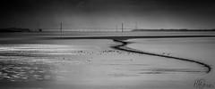 Vein of the Severn (Howard Brown) Tags: blackandwhite seascape landscape riversevern forestofdean lydney severnbridges mygearandme rememberthatmomentlevel1 rememberthatmomentlevel2 rememberthatmomentlevel3 besteverdigitalphotography