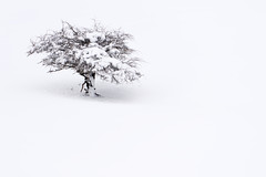 (jonlp) Tags: winter white snow tree nature landscape natura paisaje euskalherria basquecountry navarre elurra zuhaitza nafarroa zuria negua lizarraga paisajea
