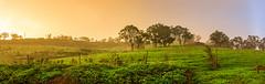 Backyard - Kearns Campbelltown NSW (Youset) Tags: