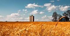 Golden dry.... (p.i.n.o.c.c.h.i.o) Tags: sky field farm dry farms crops mygearandme