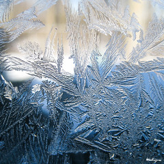 Frosted Feathers - Plumes givres (monteregina) Tags: morning windows winter sun canada abstract macro art ice window nature water glass colors closeup droplets eau frost crystals couleurs fenster hiver details natur sparkle textures qubec designs condensation abstraction transparent ferns eis fentre sparkling formations icecrystals glace givre matin jackfrost eisblumen fougres vitre frostedglass gouttes abstrait iceart eiskalt kristalle cristaux iceflowers frostflower eiskristalle frostywindow icepatterns monteregina icecolors fentregivre motifsdeglace crystalsdeglace frostycrystals frondsinice